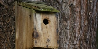 'Make your Own Birdhouse' with At Sarah's House